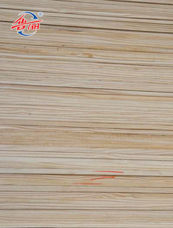 Loblolly pine laminated board